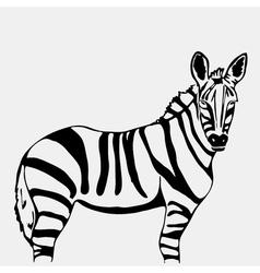Hand-drawn pencil graphics zebra Stencil style vector image