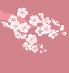 sacura tree blossom vector image vector image