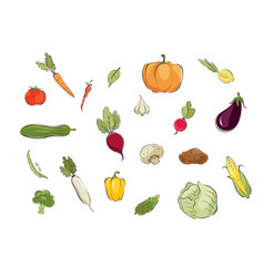 collection pictures - vegetables vector image