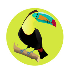 Big bright toucan tropical bird vector