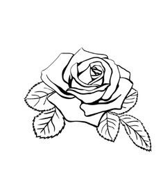Rose sketch vector image vector image