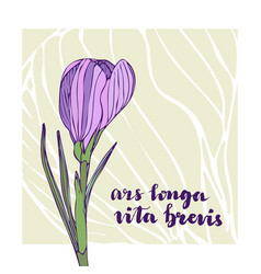 Vintage greeting card with crocus flower and vector