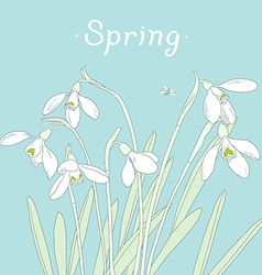 Snowdrops spring bouquet hand-drawn card vector
