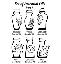 Set of stylized bottles with essential oils part 2 vector
