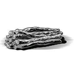 Sticks of licorice vector