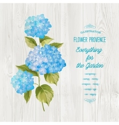 The hortensia flower vector