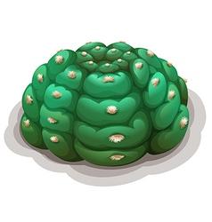 Astrophytum asterias kikko vector