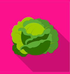 Cabbage icon flat single plant icon from the big vector