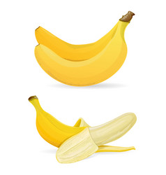 Isolated bananas on white background vector