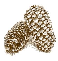 Engraving pine cone vector