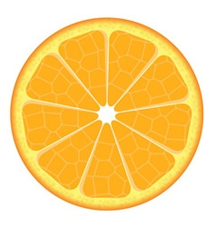 Orange slice on white background vector image