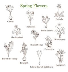 spring flowers set vector image
