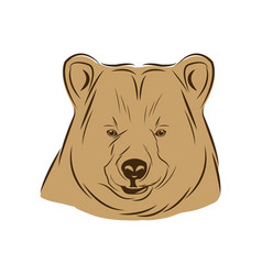 head bear animal free spirit symbol vector image vector image