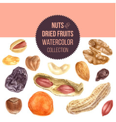 background with nuts and dried fruits vector image vector image