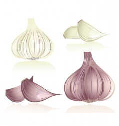 Garlic vector