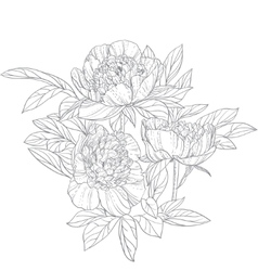 Peonies line art isolated on white background vector image vector image