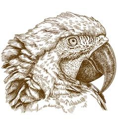 Engraving macaw head vector