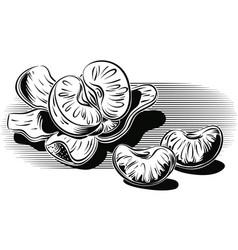 Mandarino sbucciato e alcuni spicchi vector