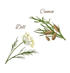 Dill cumin spice herbs isolated icons vector