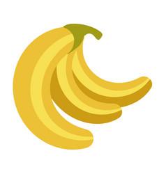 Fresh ripe delicious organic bananas bunch vector