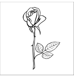 Rose sketch vector