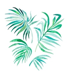 Watercolor palm leaves isolated on white vector