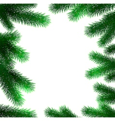 Christmas fir tree branches vector image