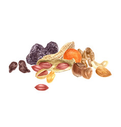 Nuts and dried fruits watercolor border vector
