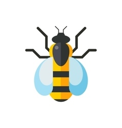 European western honey yellow bee vector