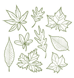 Set of autumn leaves nature silhouette icon line v vector