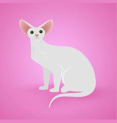 white sitting cat vector image