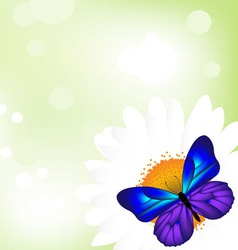 Butterfly camomile vector