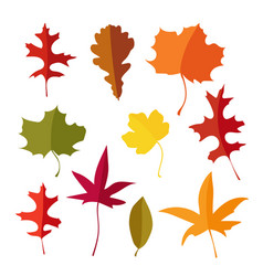 colorful set of autumn lmaple oak and liquidambar vector image vector image
