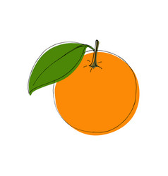 Hand drawn orange fruits in vintage style vector