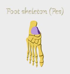 Human organ icon in flat style foot skeleton vector