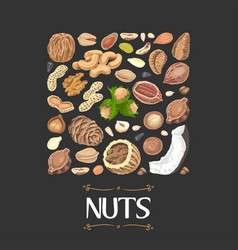 Isolated square of nuts and seeds vector