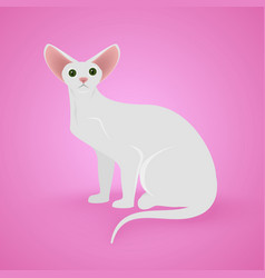 White sitting cat vector