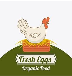 fresh eggs vector image