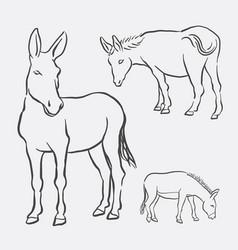 Donkey pet animal sketch vector