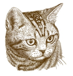 Engraving cat head vector