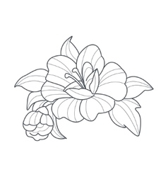 Dog rose flower monochrome drawing for coloring vector