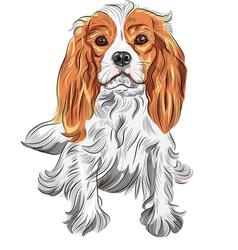 Dog cavalier king charles spaniel vector