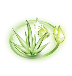 Aloe vera plant with small extract oil drops vector