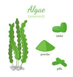 Green seaweed - healthy spirulina algae vector