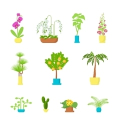 Set of house plants vector