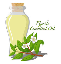 Essential oil of myrtle vector