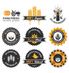 wheat production label set vector image