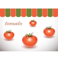 Red fresh tomatoes on white background vector