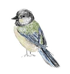 bird hand drawn vector image