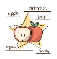 delicious healthy food with nutrition ingredients vector image